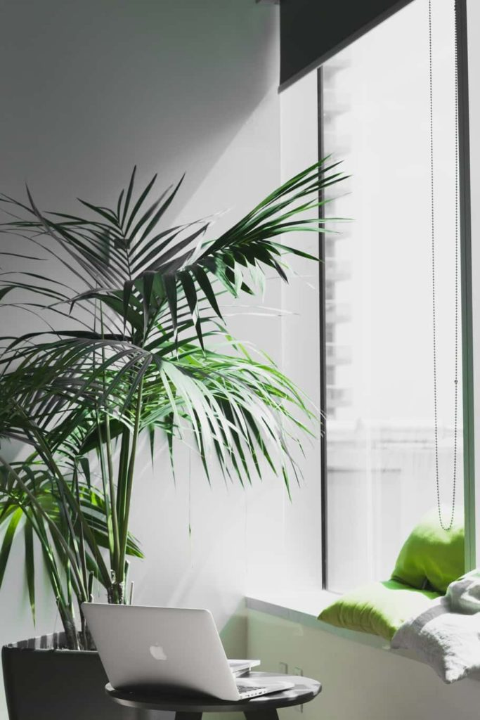 Plants in a white room office